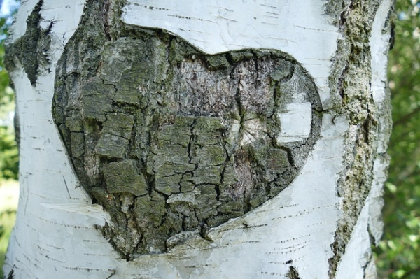 Birch Tree Bark Heart